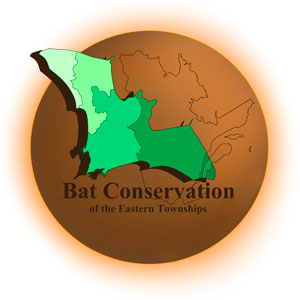 Bat conservation of Eastern Townships